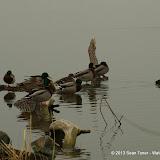 01-26-13 White Rock Lake - IMGP4314.JPG