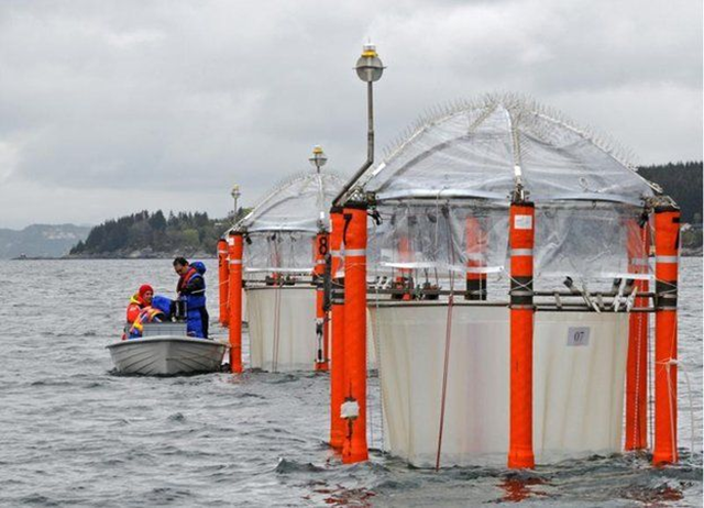 Mesocosms ('giant test tubes') allow scientists to study acidification effects on real-world organisms. Photo: Maike Nicolai / GEOMAR