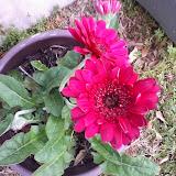 Gardening 2014 - 0404190729.jpg