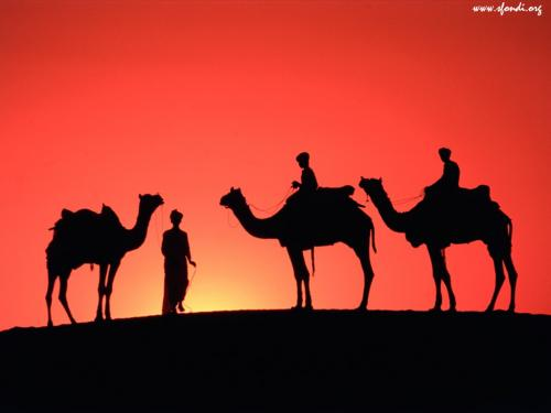 Cammelli al tramonto