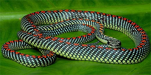 75 Colourful But Scary Reptiles 1