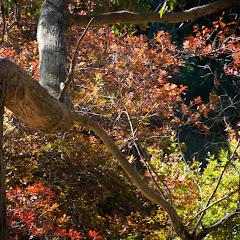 2011 04 25 Mt Lofty Botanic Garden - IMG_6573.jpg