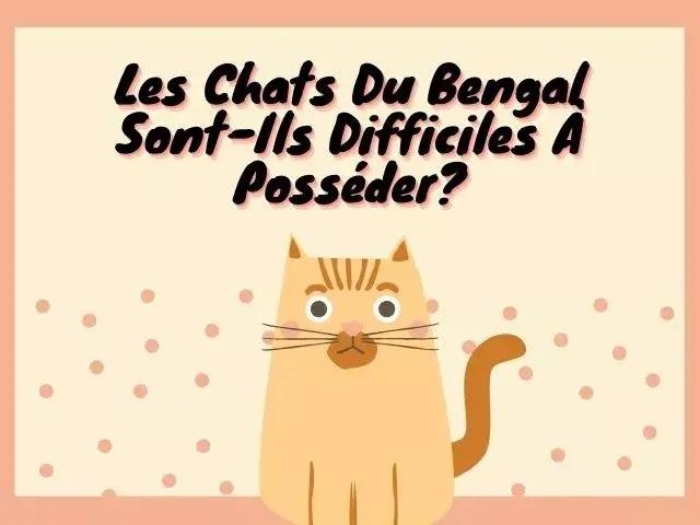Les Chats Du Bengale Sont-Ils Difficiles À Posséder?