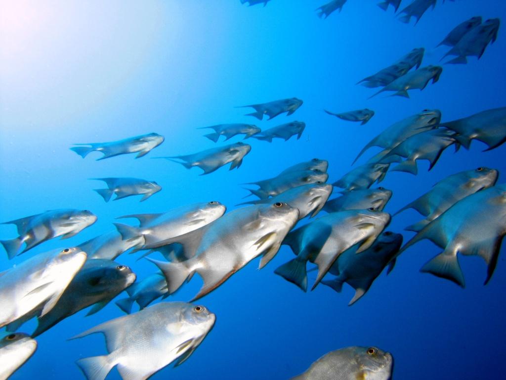 Go Fish Aquarium : Fish_Tank_1024x768-8807.jpeg