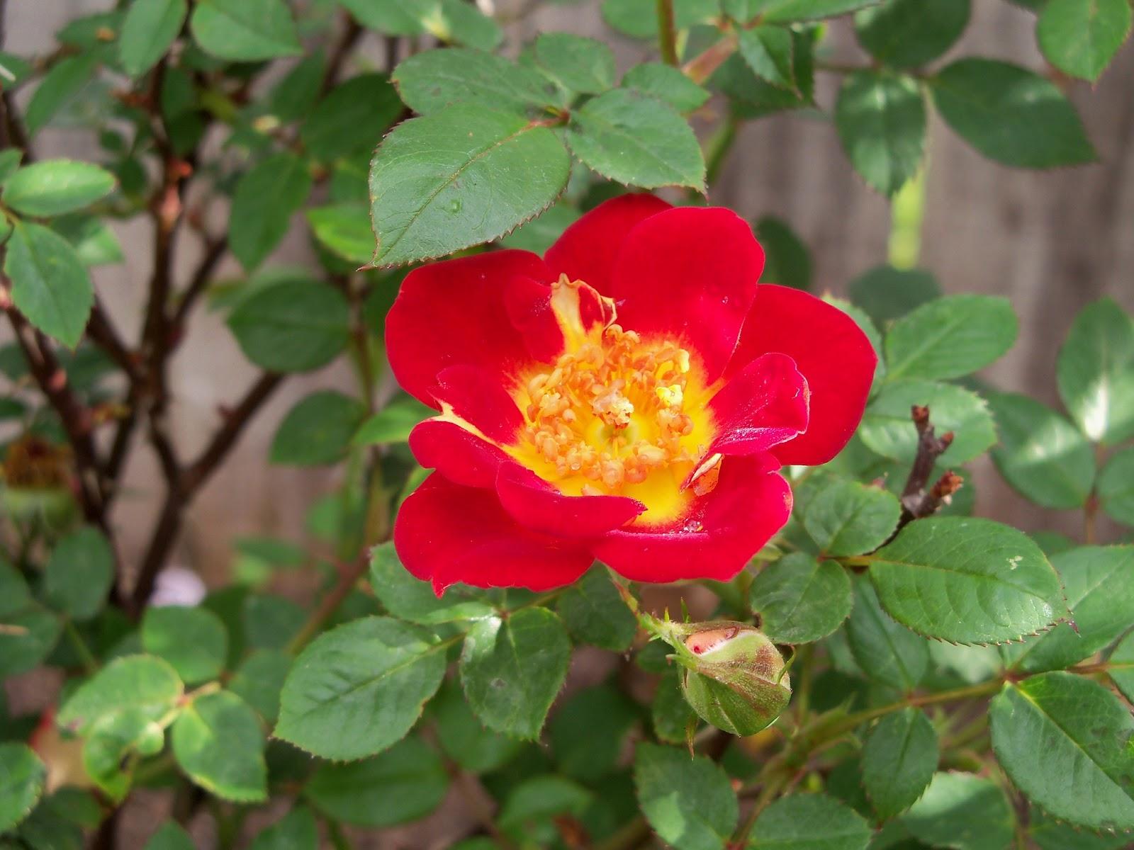 Gardening 2011 - 100_6982.JPG