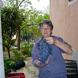 Italy: Villa Viani Winemaking 10/16/04