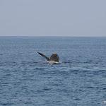 2010_01_23_Whalewatching_Maui_Hawaii