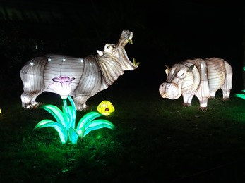 2018.12.03-078 hippopotames
