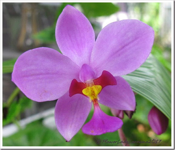 10-21-grnd-orchid