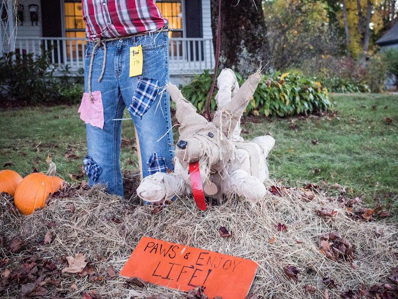 A dog scarecrow