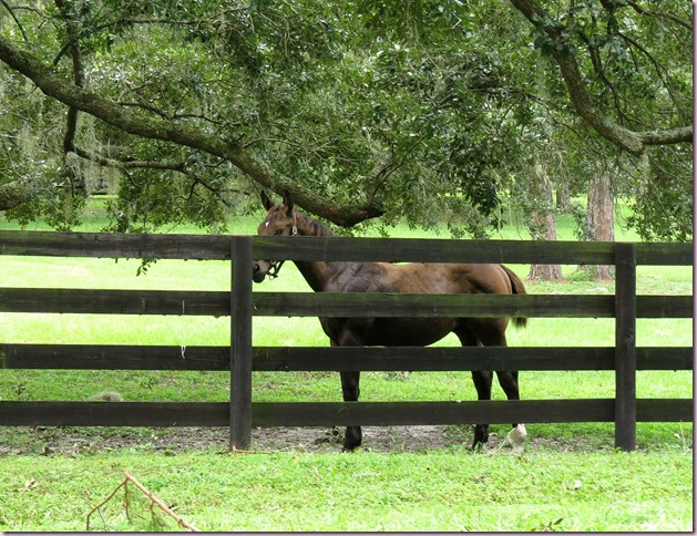 horseIMG_2217