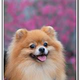 櫻花與福袋 - DSC_0120.jpg