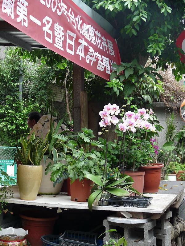 TAIWAN.Taipei - P1110326.JPG