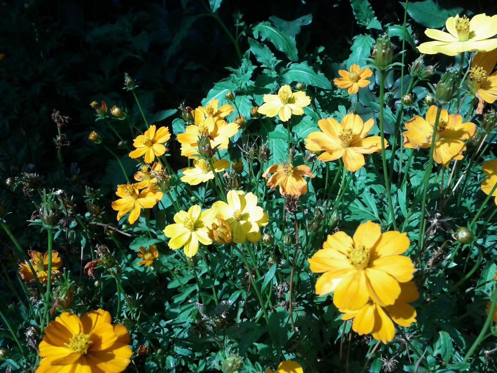 Gardening 2013 - IMG_20130318_162839.jpg