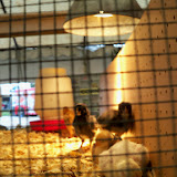 Fort Bend County Fair 2014 - 116_4202.JPG