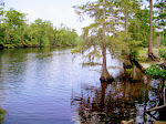 sam-houston-jones-state-park-lake-charles-la-2009 6-23-2009 2-52-22 PM 7-3-2009 10-54-00 AM.JPG