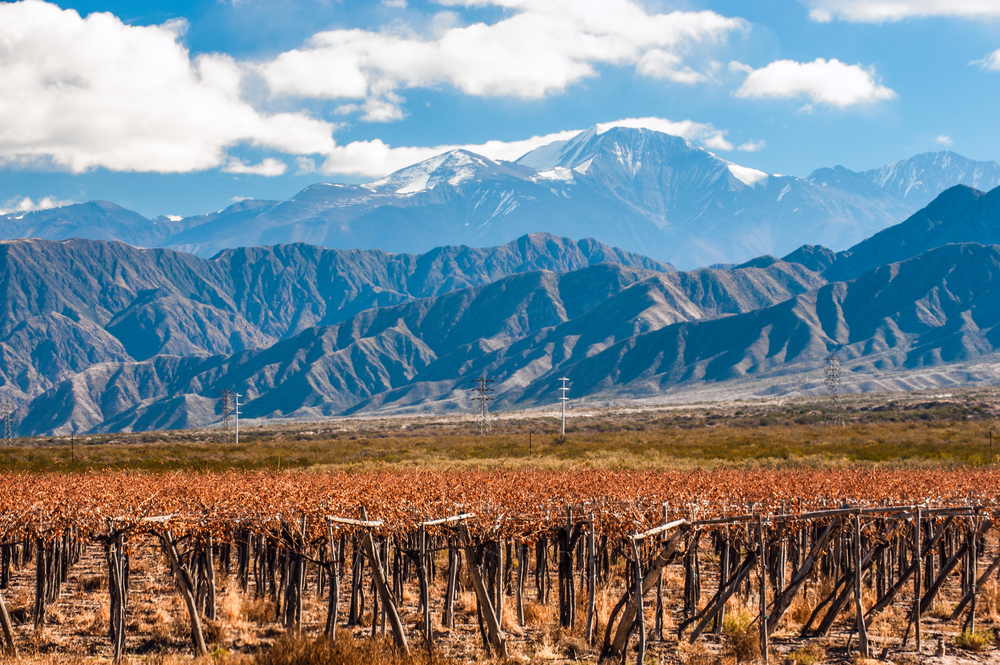 Mendoza Vineyard, Argentina