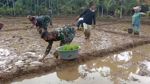 Lahan Pertanian Dukung Desa Siuhom Swasembada Pangan di TMMD Kodim Tapsel