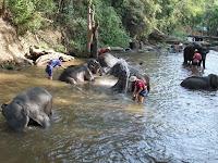 ショーの前に象たちは水浴び。 それぞれの象の個性なのか、それとも象使いの個性なのか、剽軽な象もいれば真面目に仕事をしている象もいて面白い。