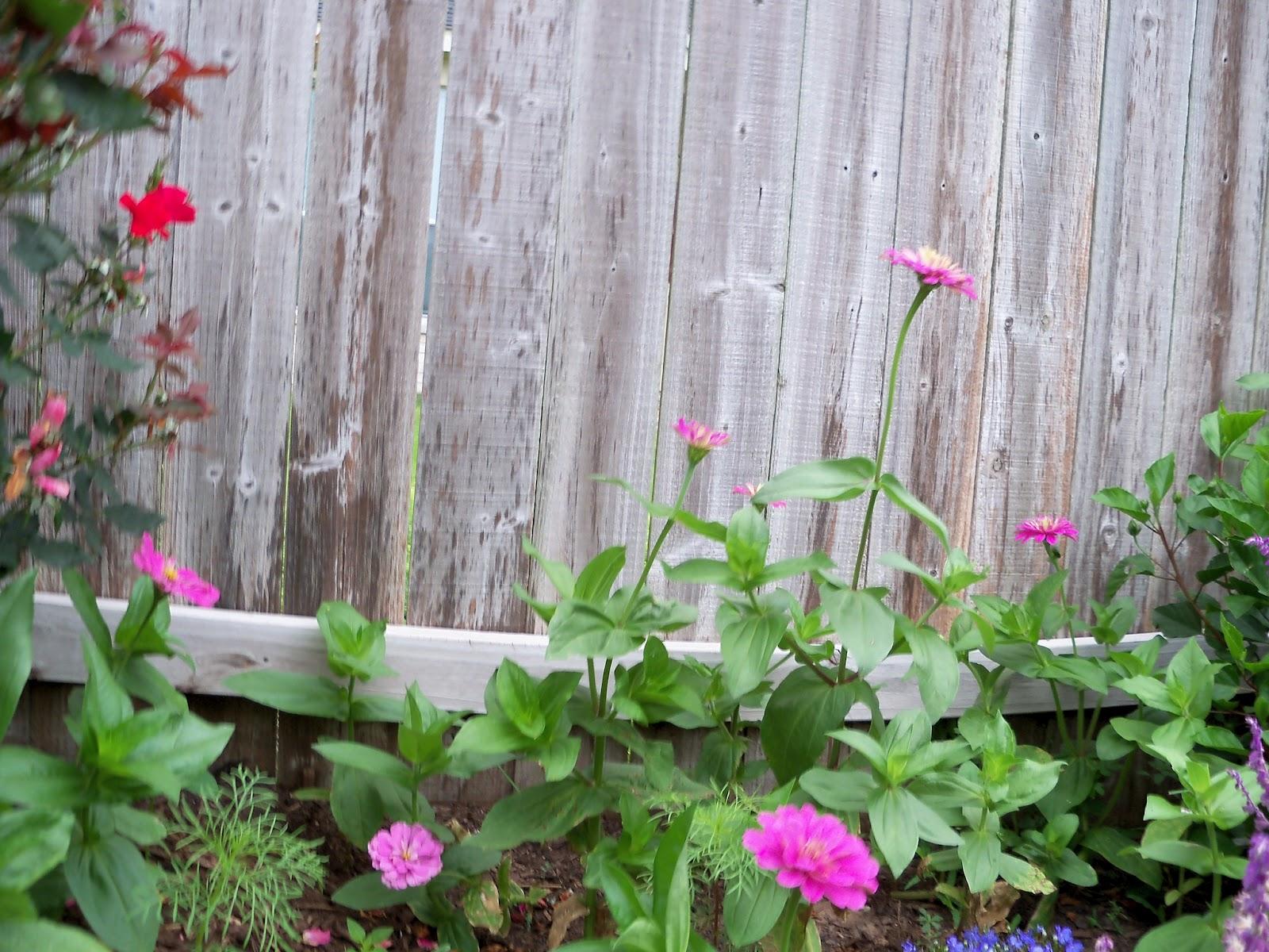 Gardening 2012 - 115_1986.JPG