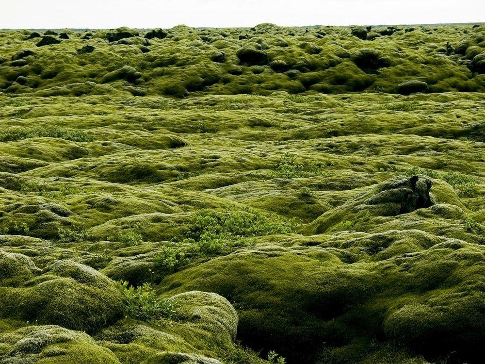 mossy-lava-fields-iceland-2
