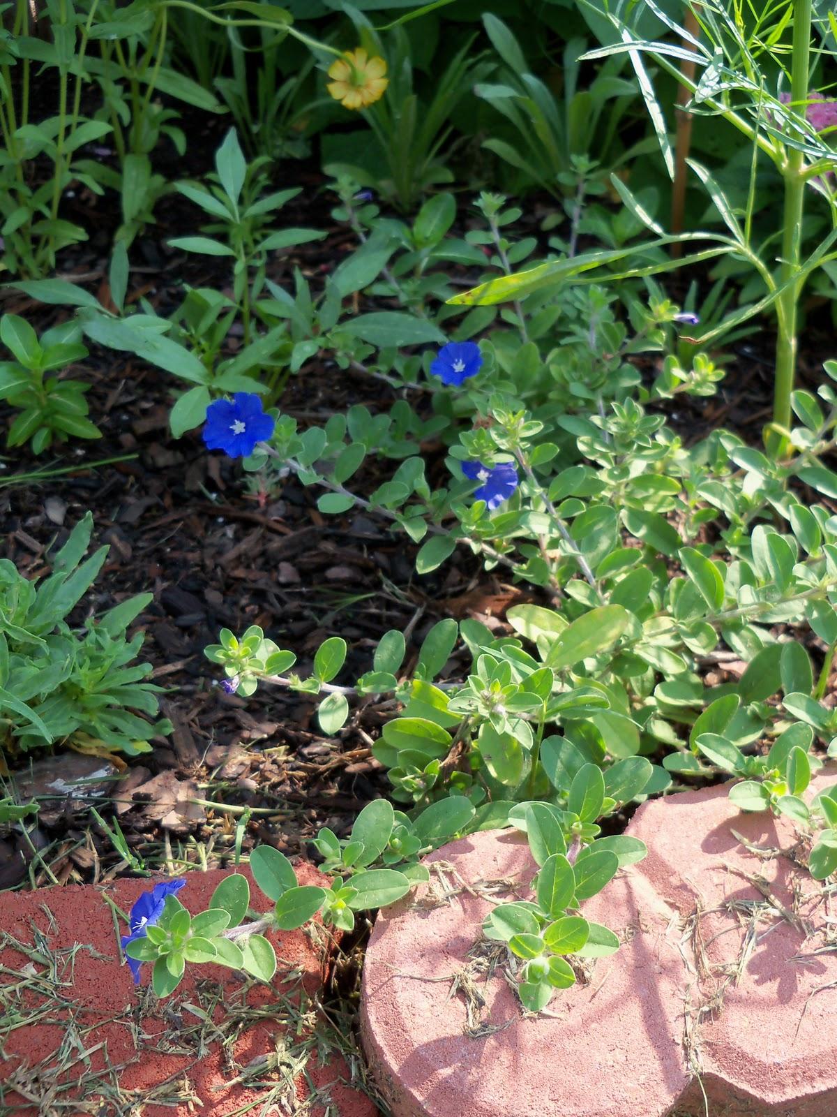Gardening 2010, Part Two - 101_3348.JPG