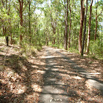 Forested trail in Blackbutt Reserve (401407)