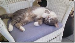 Happy cat 110217 back porch nap 2