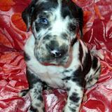 Petunia @ 4 weeks