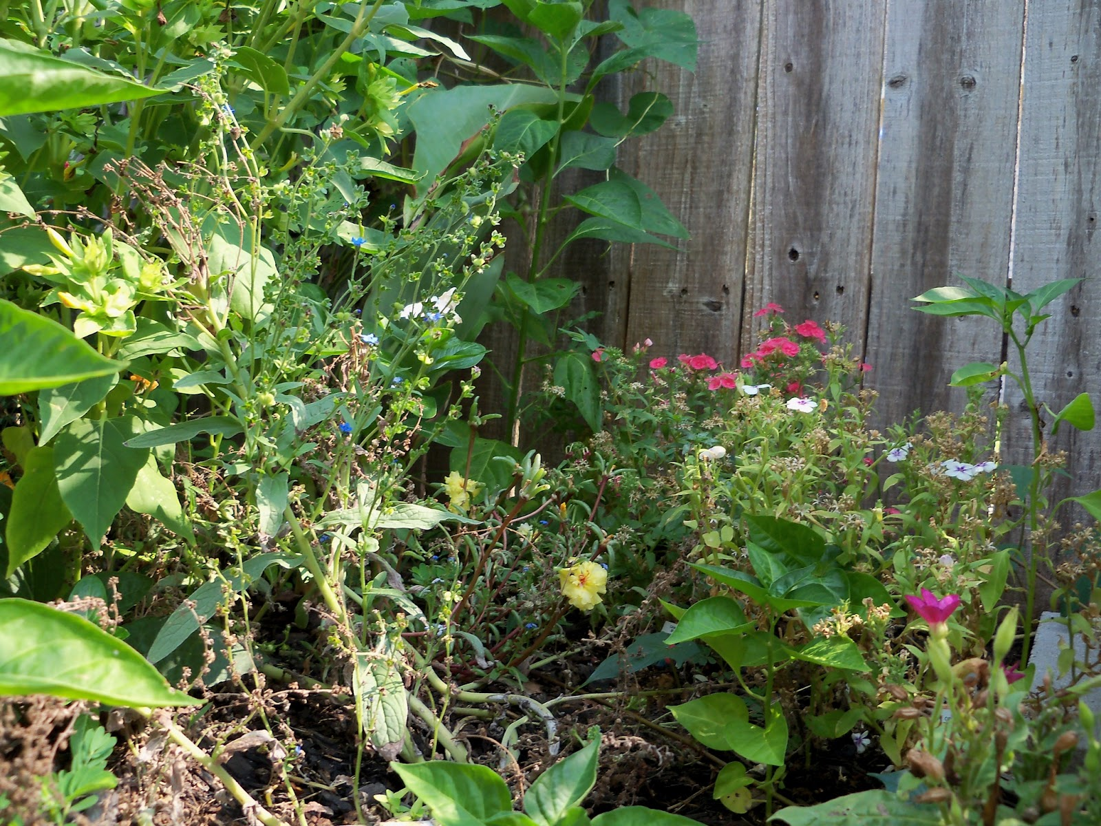 Gardening 2011 - 100_9382.JPG