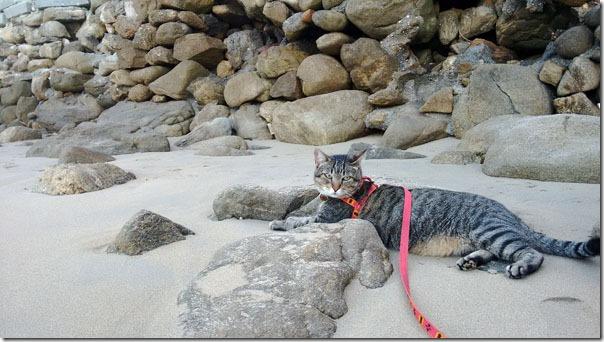 praia-do-retiro-fredy-1