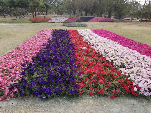 Flower bed at Central Park in Kaohsiung