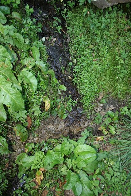 Une source parmi beaucoup d'autres en Ardèche des Volcans