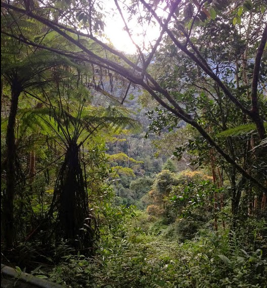 Poring, Taman Negara Gunung Kinabalu, Sabah (Malaisie), 9 août 2014. Photo : T. Boucher