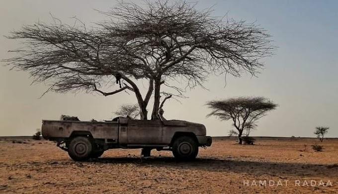 Ofensiva saharaui en el Sáhara Occidental deja al menos 7 elementos marroquíes muertos y 4 combatientes saharauis.