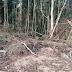 Polícia Ambiental flagra desmatamento em zona rural de Santa Maria de Jetibá