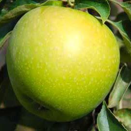 Гранни Смит яблоня купить