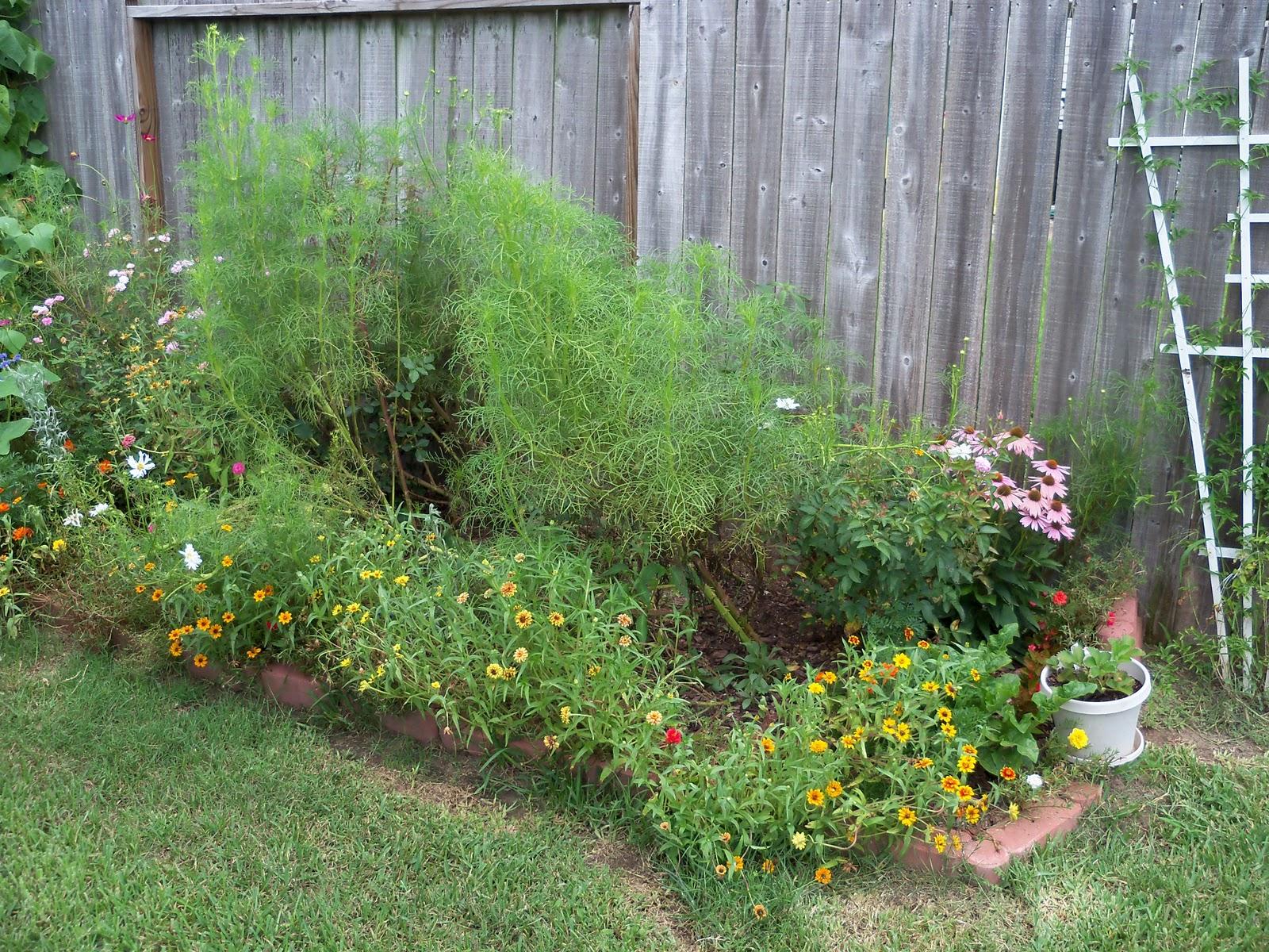 Gardening 2010, Part Three - 101_4817.JPG