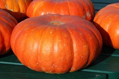 pumpkins-432607_1280