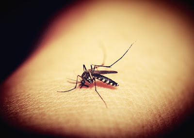 All You Need To Know About Zika Virus!