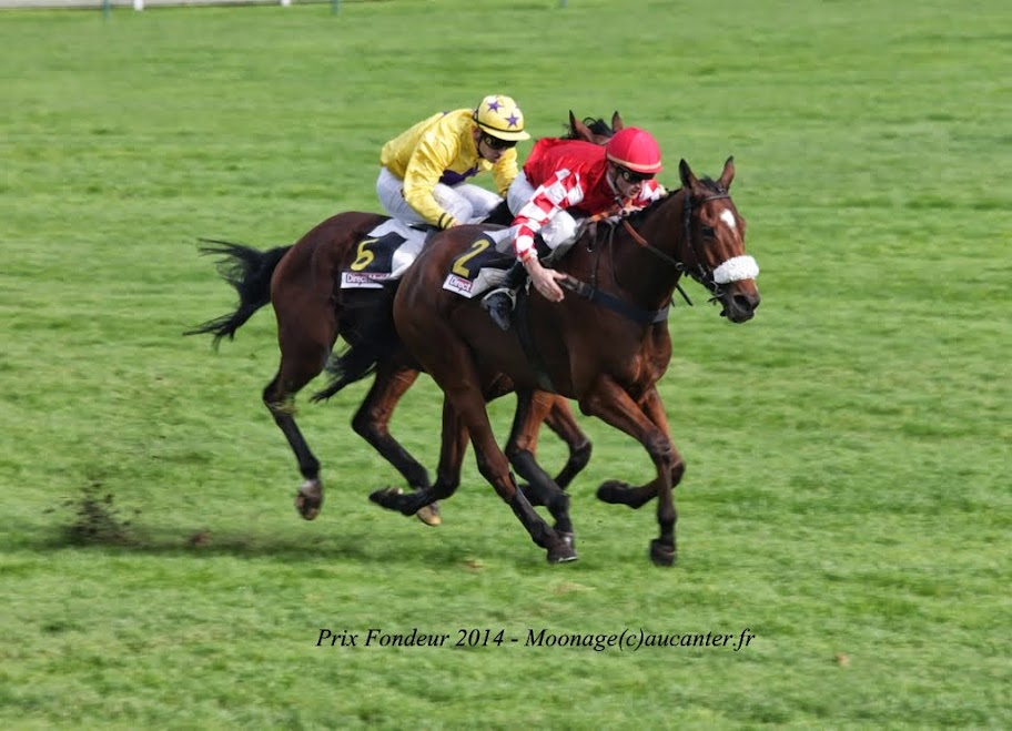 Photos Auteuil 2-11-2014 (48h de l'obstacle) IMG_5289