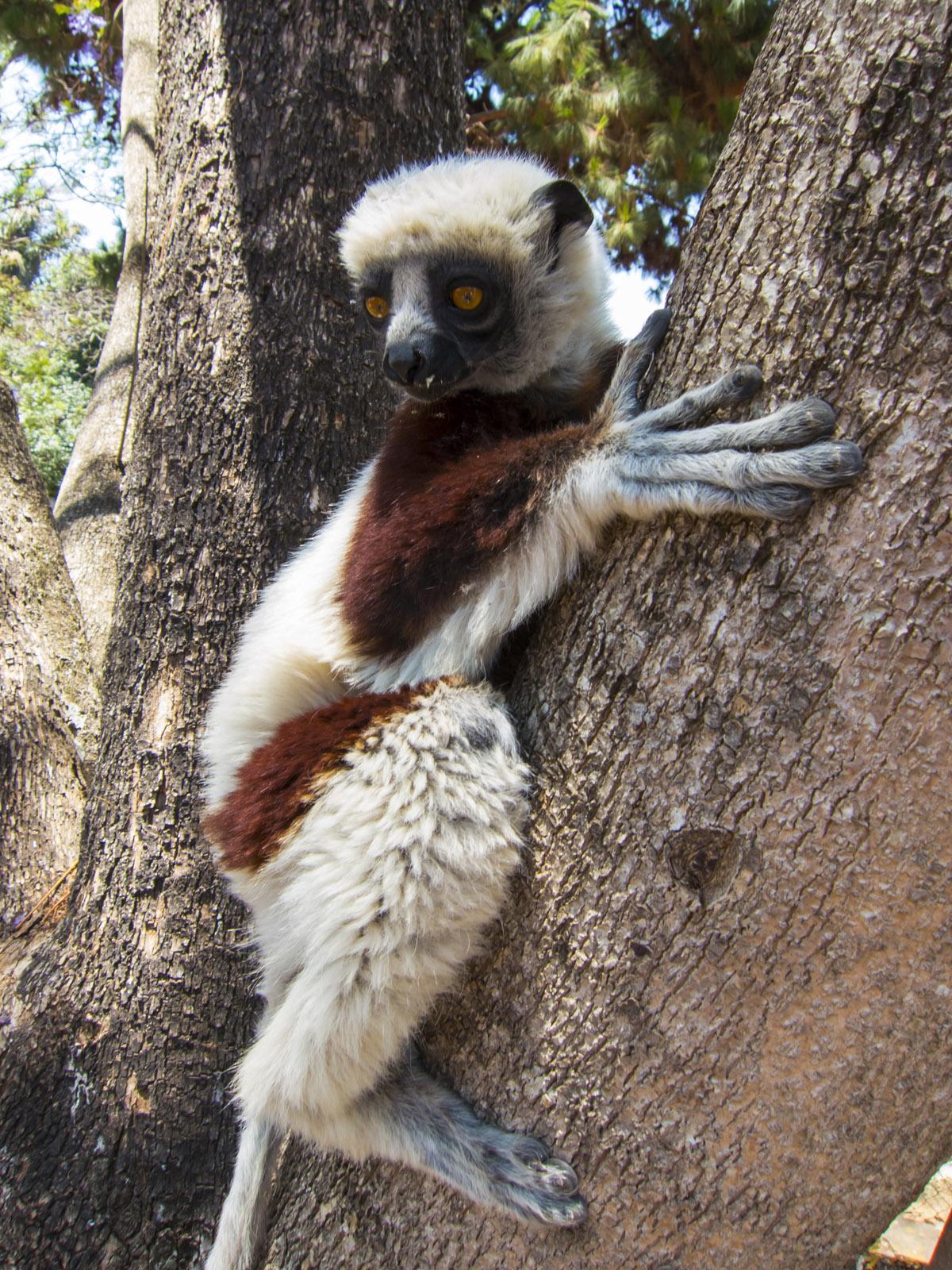 Madagascar9-147.jpg