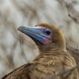 galapagos - Galapagos_FB_2-11.jpg