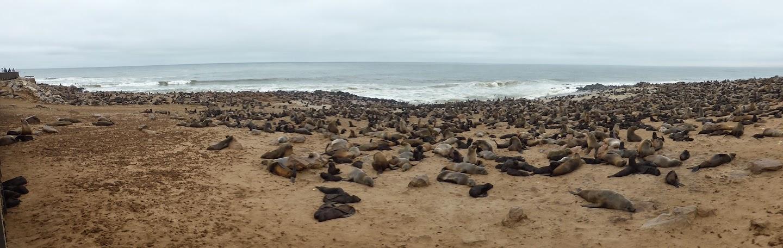 Enorme pelsrobben kolonie in Cape Cross, Namibie
