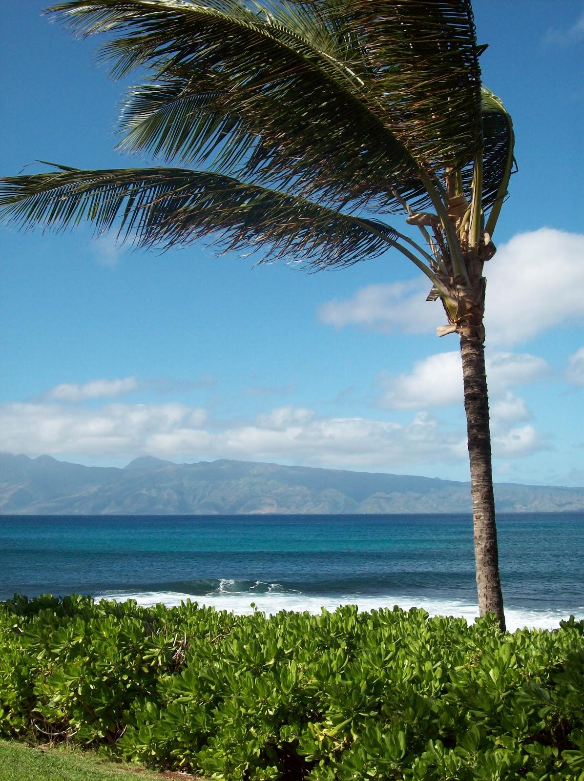 Hawaii Day 6 - 114_1790.JPG