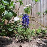 Gardening 2013 - 115_5718.JPG