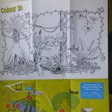 Раскраска животных, живущих в этом Саду