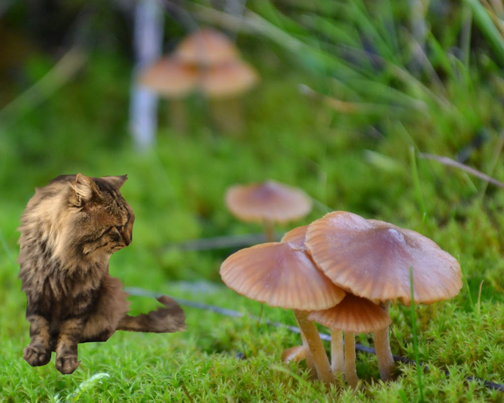 """Mushroom Village"" by Sita Thompson -- 2nd Place Digital Special ""B"" Group"