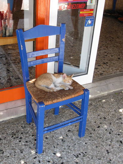 kot wystawowy