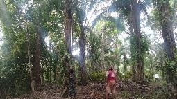 TNI dan Rakyat Kompak dalam Giat Panen  Sawit